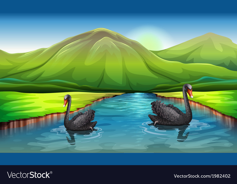 Swans on lake landscape vector | Price: 1 Credit (USD $1)
