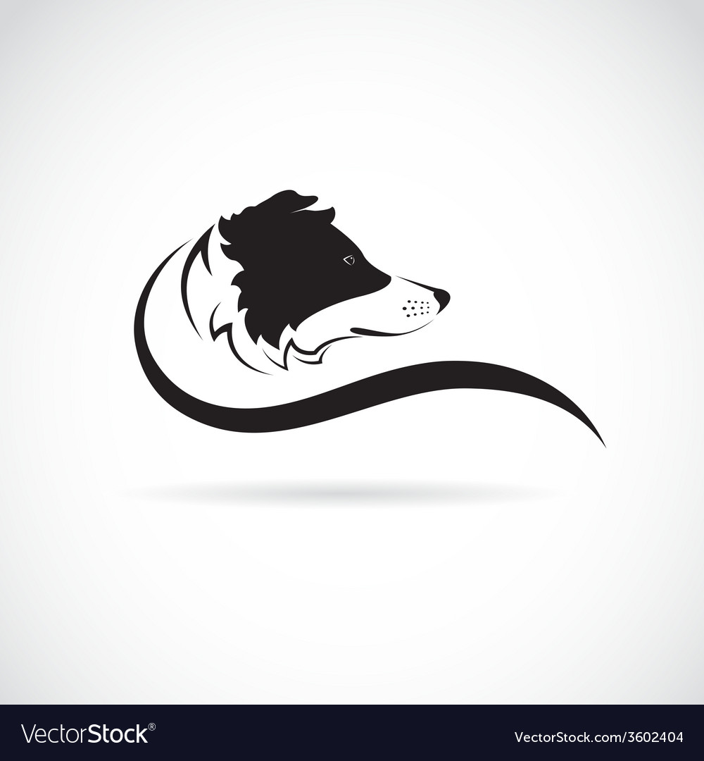 Image of an border collie dog vector | Price: 1 Credit (USD $1)