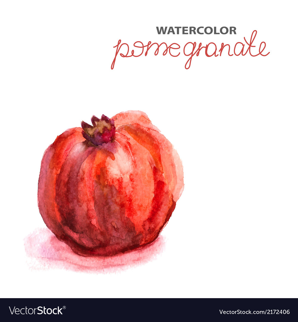 Background with watercolor pomegranate vector | Price: 1 Credit (USD $1)