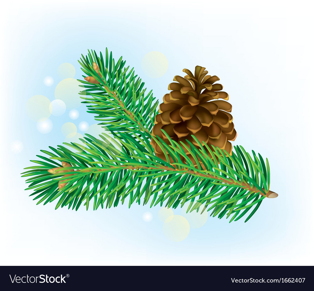 Branch of spruce with pine cone vector | Price: 1 Credit (USD $1)