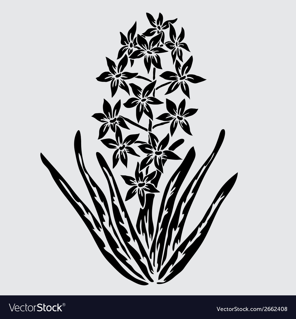 Decorative hyacinth vector | Price: 1 Credit (USD $1)