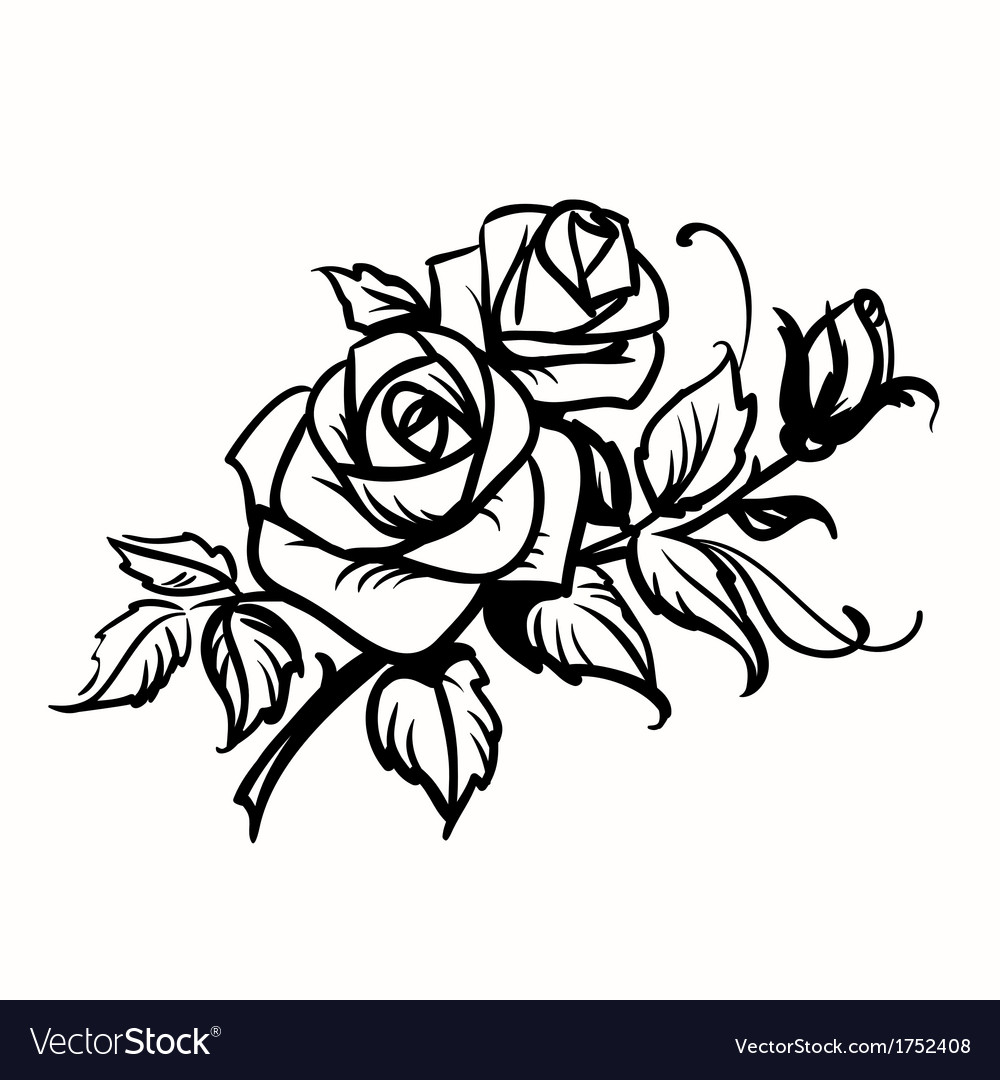 Roses black outline drawing on white background vector | Price: 1 Credit (USD $1)