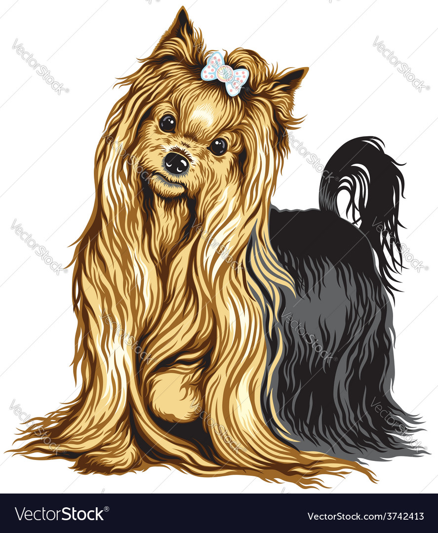 Yorkshire terrier vector | Price: 3 Credit (USD $3)