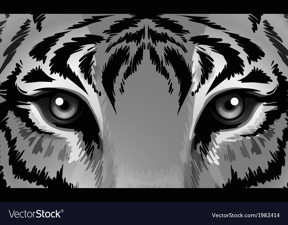 A tiger with sharp eyes vector | Price: 1 Credit (USD $1)