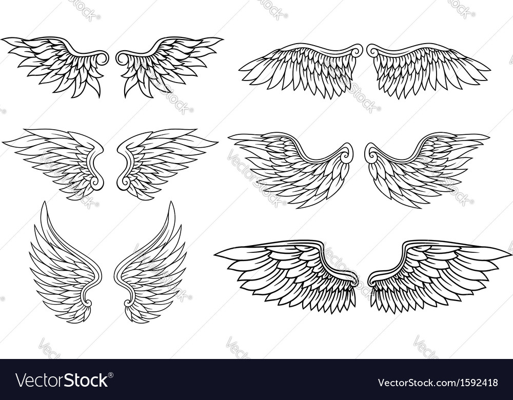 Set of eagle or angel wings vector