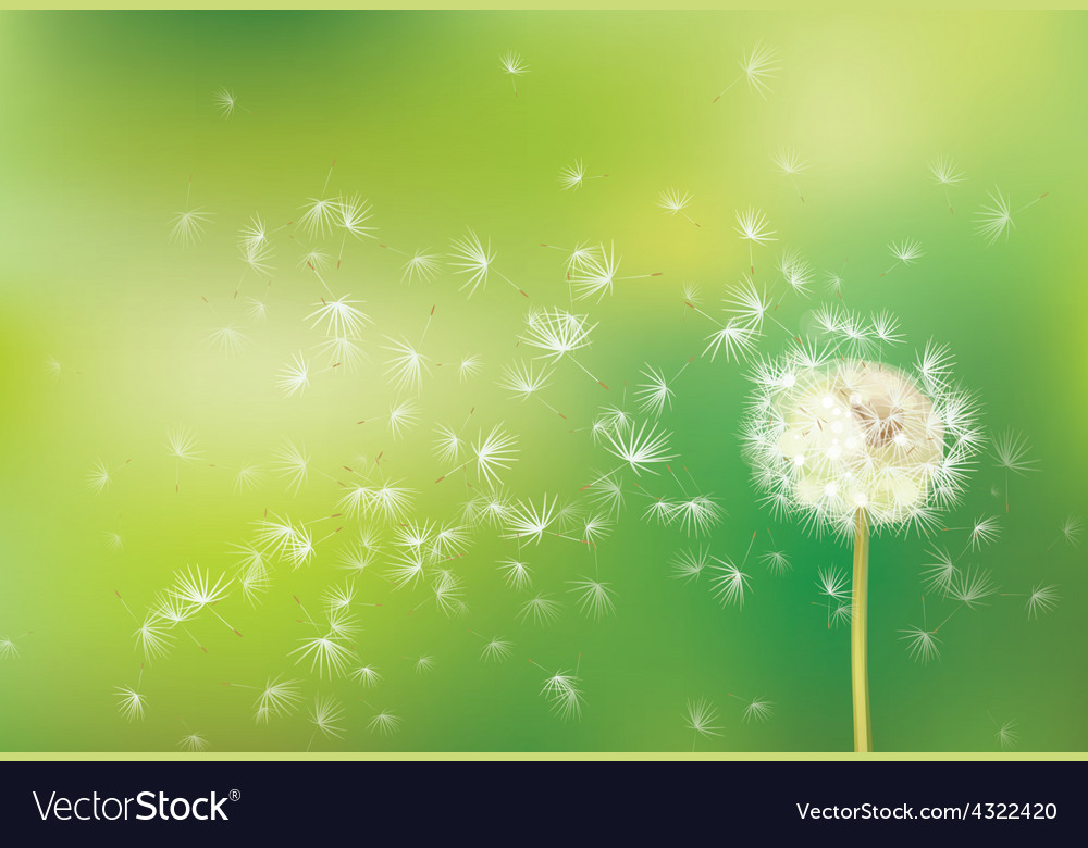 Dandelion green background vector | Price: 1 Credit (USD $1)
