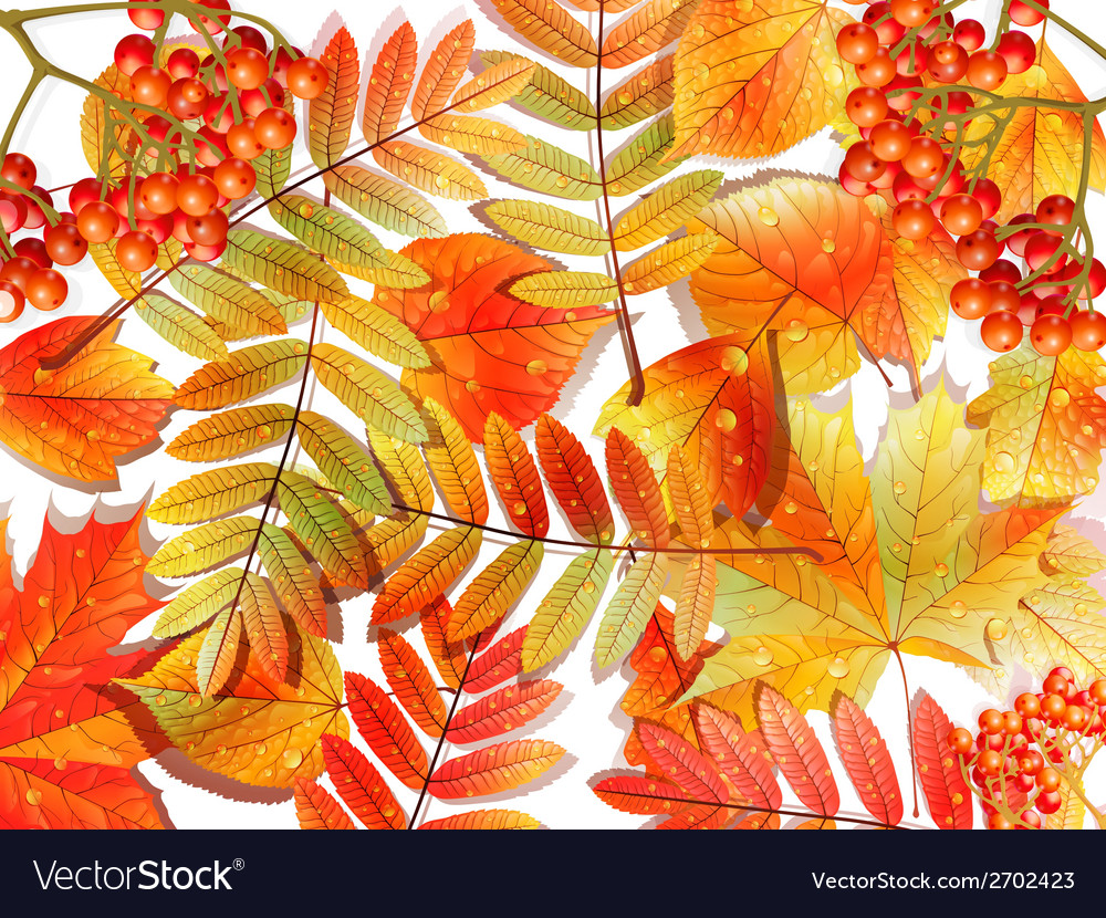 Group autumn multicilor leaves on white vector   Price: 1 Credit (USD $1)