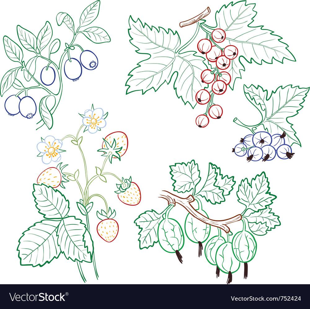 Berries set vector   Price: 1 Credit (USD $1)