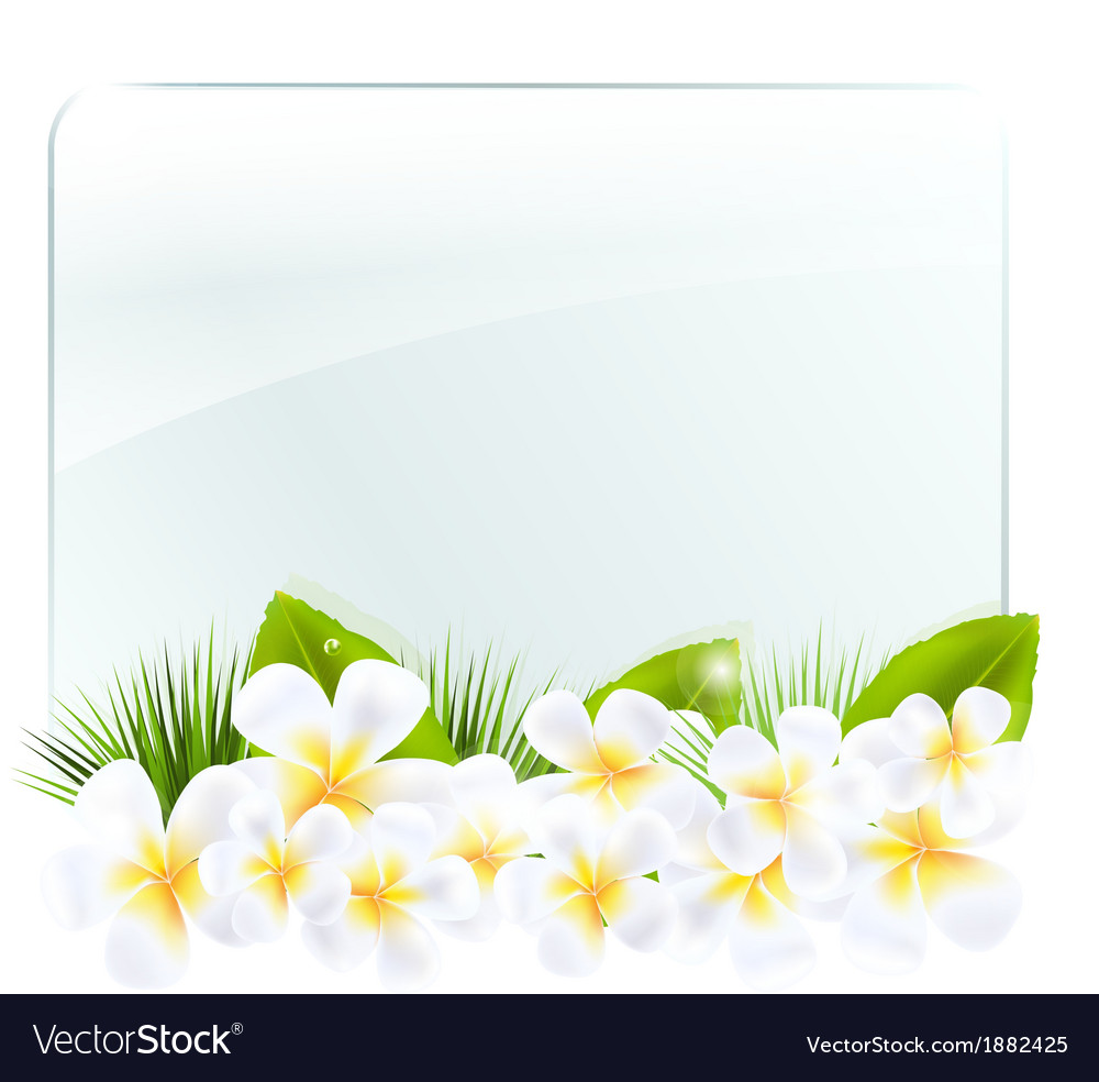 Glass frame with frangipani vector | Price: 1 Credit (USD $1)