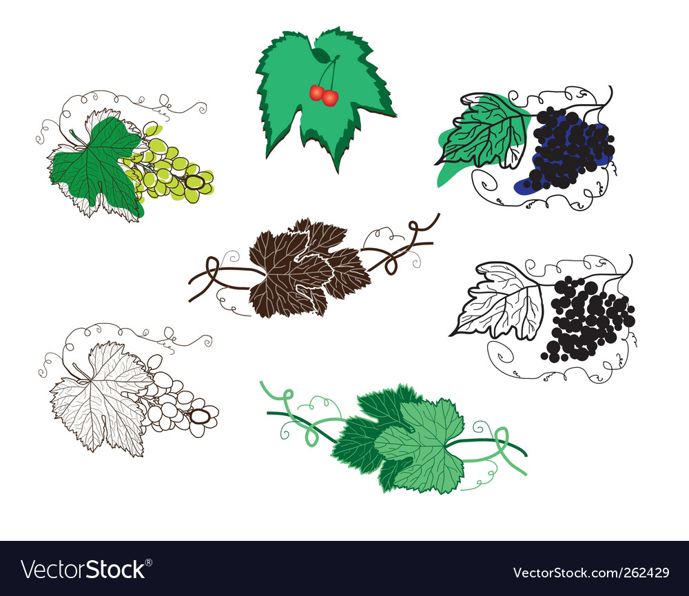 Set of grape design elements vector | Price: 1 Credit (USD $1)