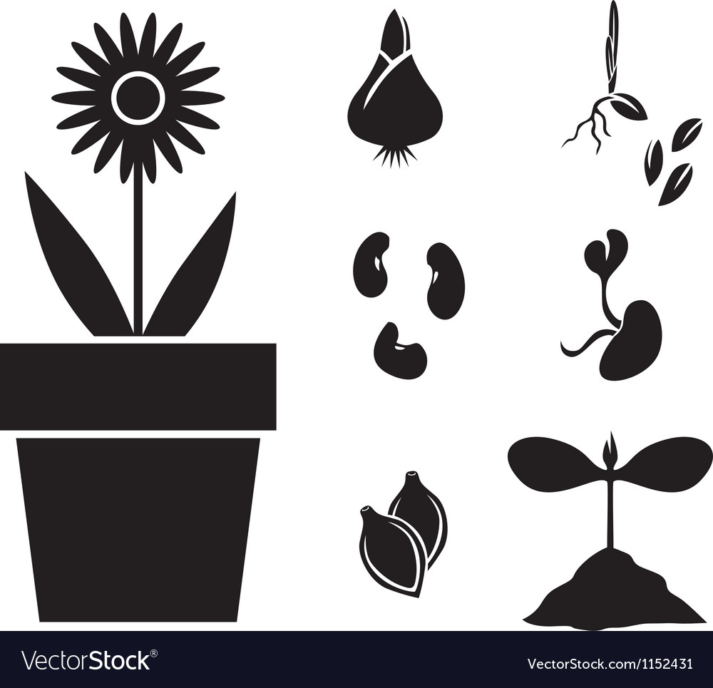 Flower and seed vector | Price: 1 Credit (USD $1)