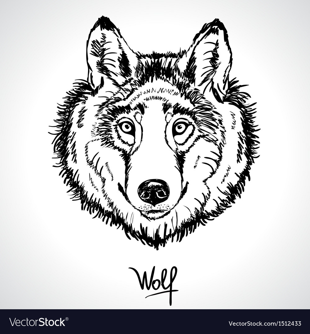 Wolf drawing vector | Price: 1 Credit (USD $1)