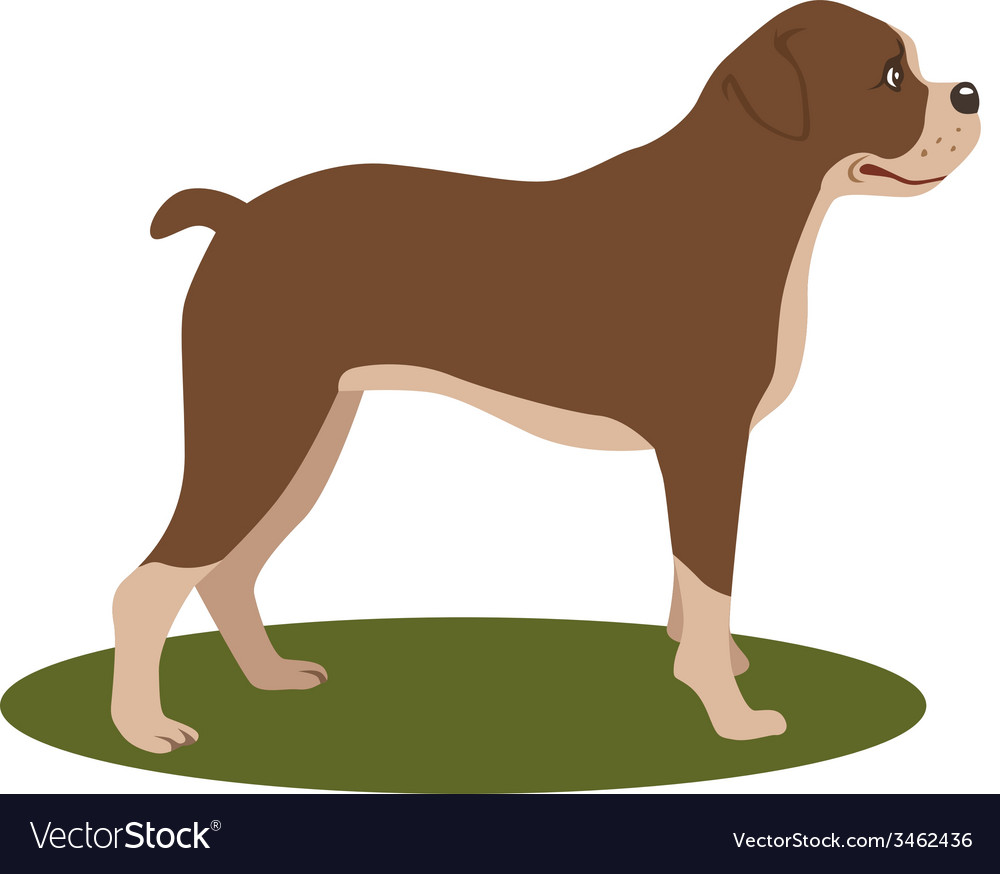 Dog boxer vector | Price: 1 Credit (USD $1)