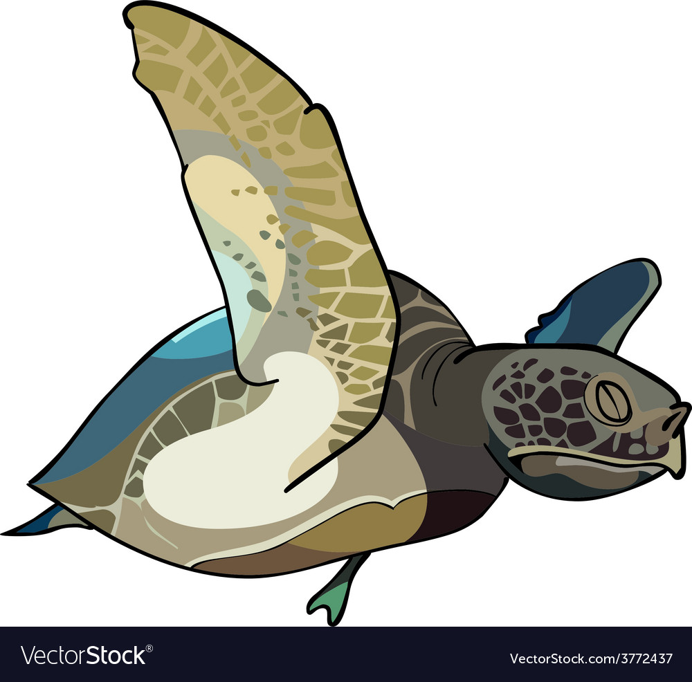 Turtle swim vector | Price: 1 Credit (USD $1)