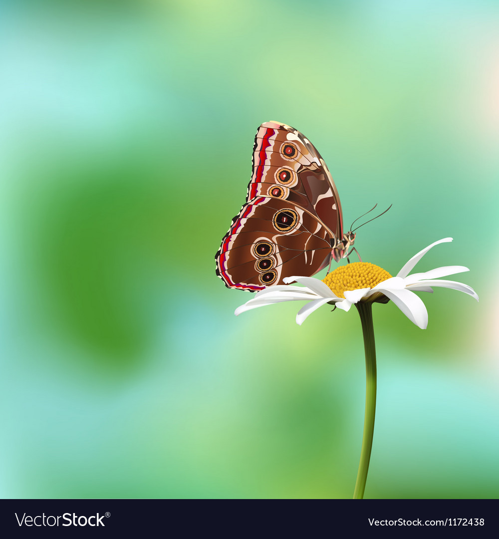 Butterfly on a flower vector | Price: 1 Credit (USD $1)