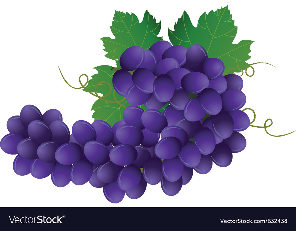 Image of violet grape with green leaves vector | Price: 1 Credit (USD $1)