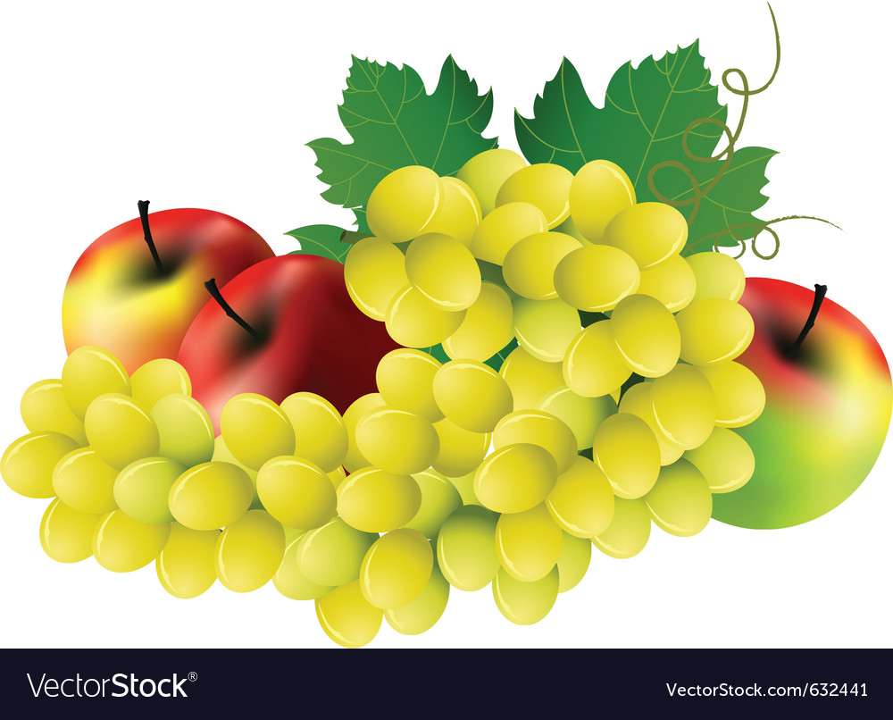 Image of grape three red apples on white vector | Price: 1 Credit (USD $1)