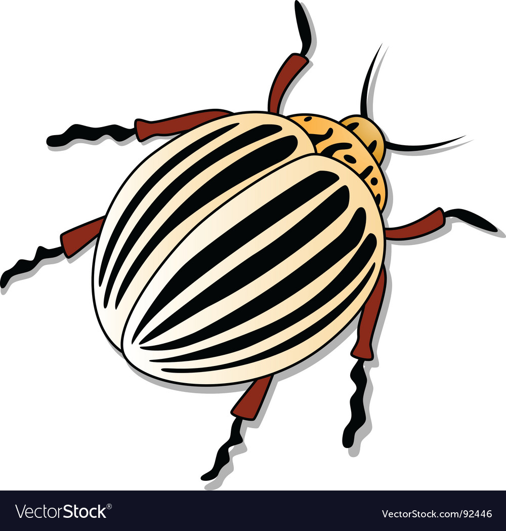 Colorado potato beetle vector | Price: 1 Credit (USD $1)