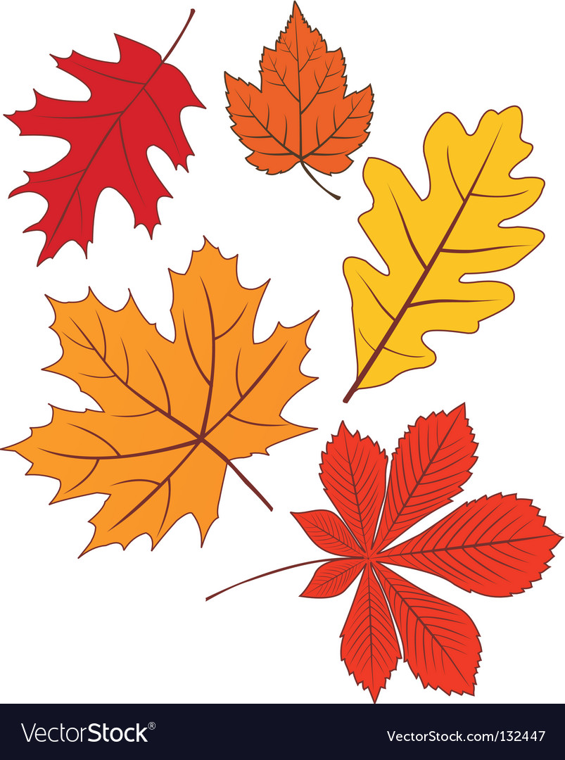 Collection of autumn leave shapes vector | Price: 1 Credit (USD $1)