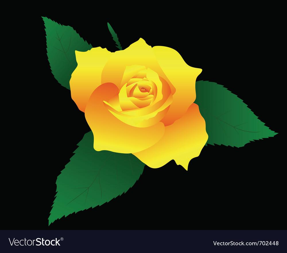 Yellow rose vector | Price: 1 Credit (USD $1)