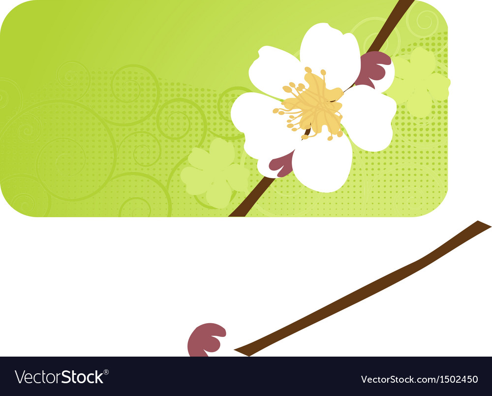 Cherry blossom sakura flower vector | Price: 1 Credit (USD $1)