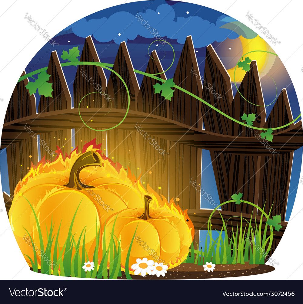 Burning pumpkins under the fence vector | Price: 3 Credit (USD $3)