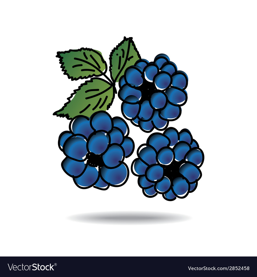 Freehand drawing dewberry icon vector | Price: 1 Credit (USD $1)