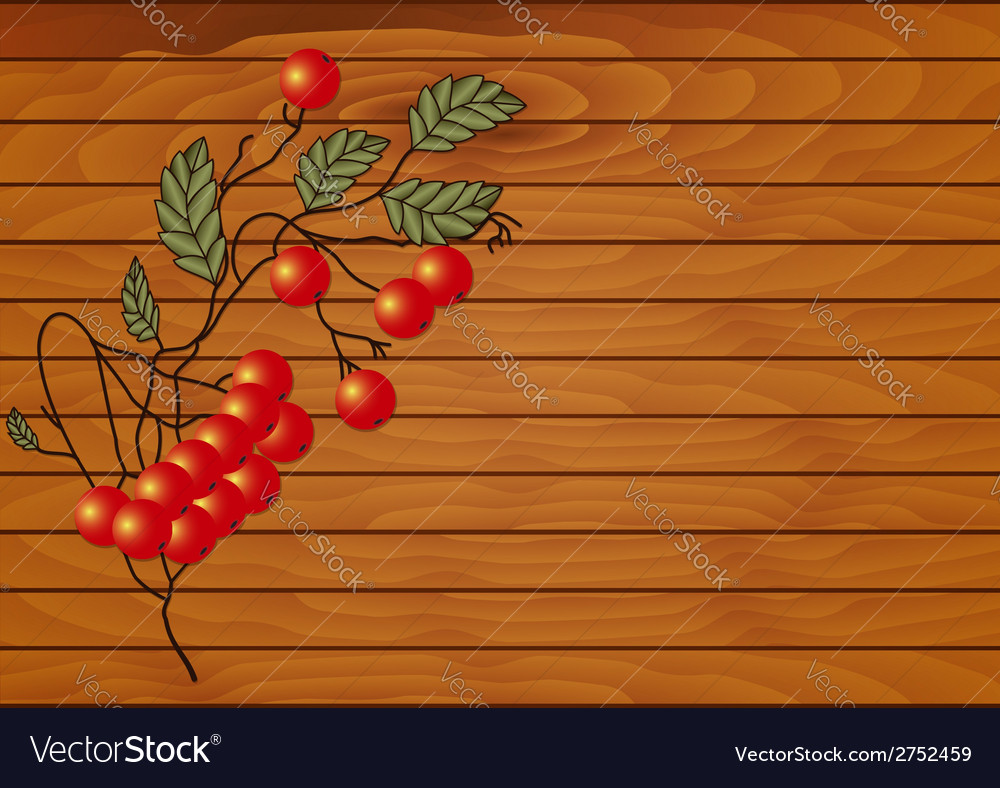 Red rowan branch vector | Price: 1 Credit (USD $1)