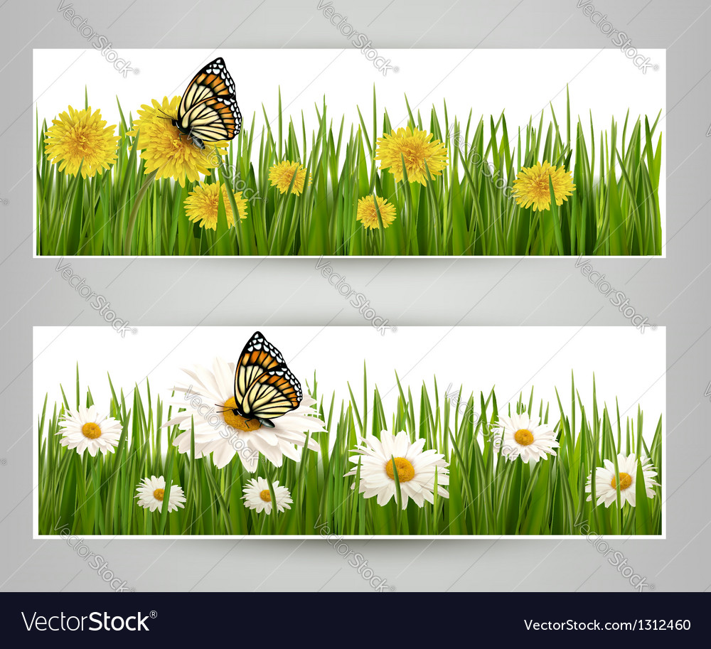 Two banners with butterflies and flowers vector | Price: 3 Credit (USD $3)