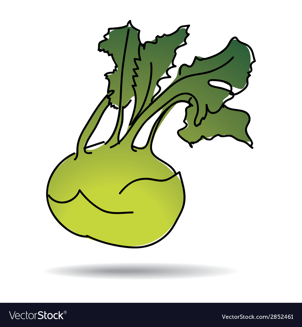 Freehand drawing kohlrabi icon vector | Price: 1 Credit (USD $1)