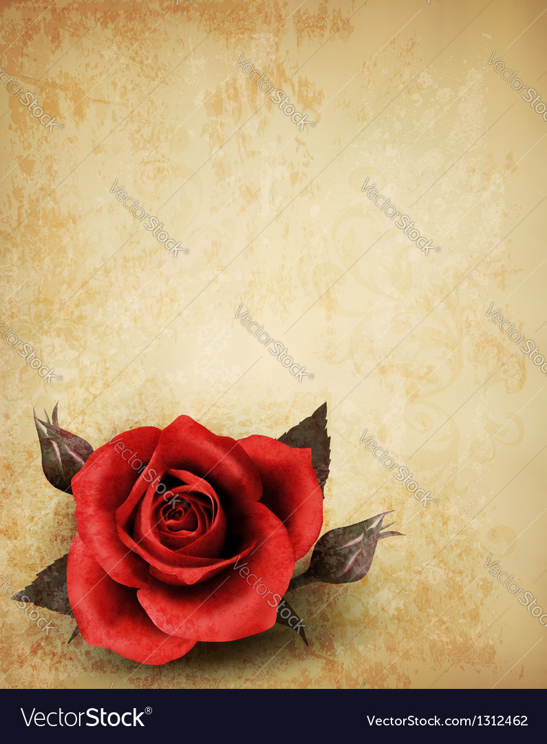 Big red rose on old paper background vector | Price: 3 Credit (USD $3)