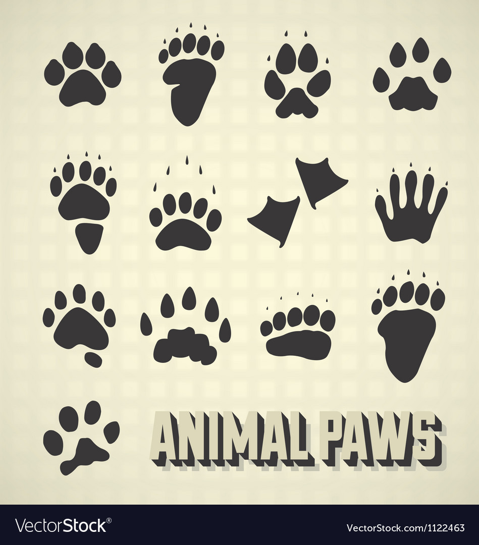Animal paw prints vector | Price: 1 Credit (USD $1)