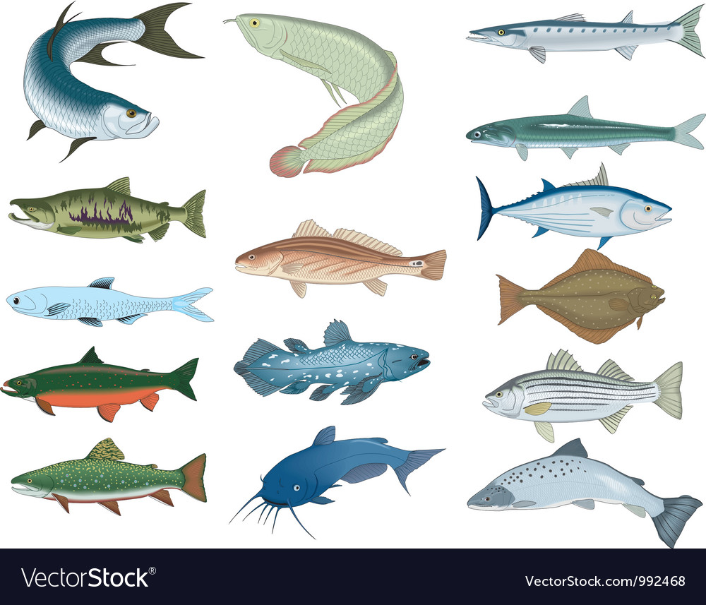 Fish vector | Price: 3 Credit (USD $3)