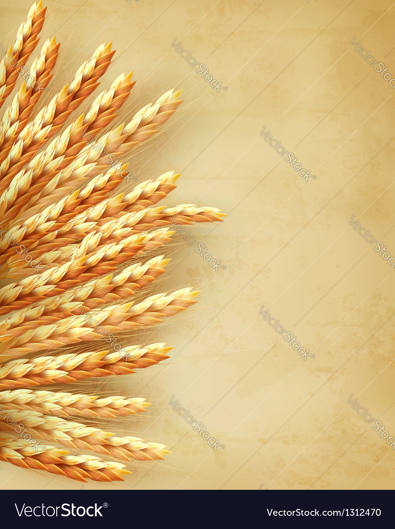Ears of wheat on old paper background vector | Price: 3 Credit (USD $3)