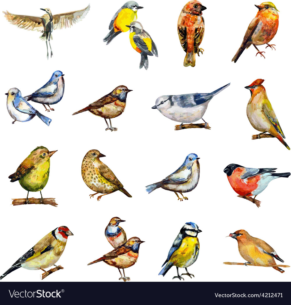 Collection of birds watercolor painting vector | Price: 1 Credit (USD $1)