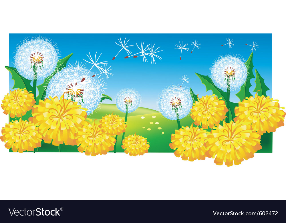 Meadow with dandelions vector | Price: 3 Credit (USD $3)
