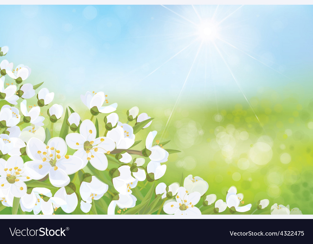 Spring nature blossom tree vector | Price: 1 Credit (USD $1)