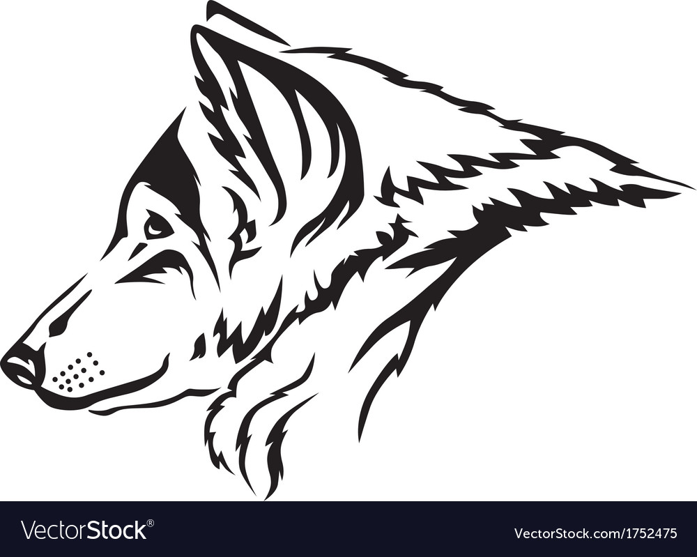Wolf muzzle vector | Price: 1 Credit (USD $1)