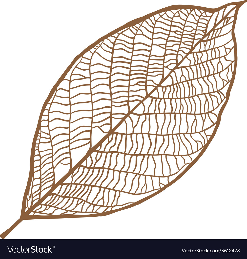 Nut leaf isolated on white background vector | Price: 1 Credit (USD $1)