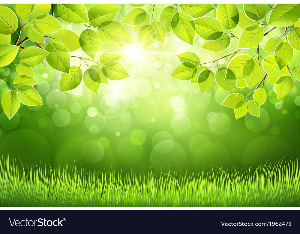 Natural background with leaves vector | Price: 1 Credit (USD $1)