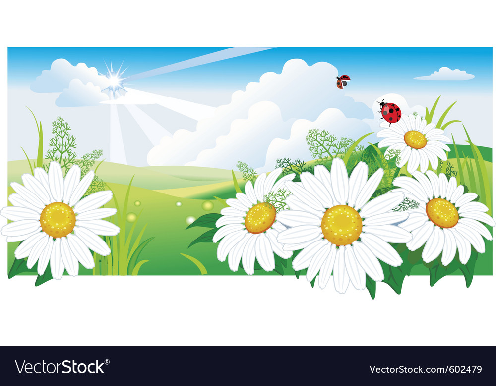 Summer landscape with a chamomile vector | Price: 3 Credit (USD $3)