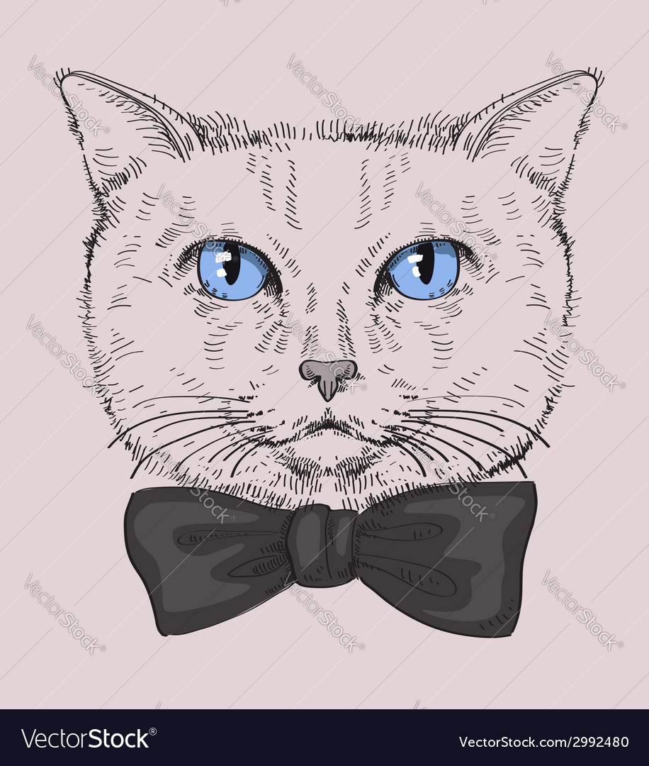 Hipster cat vector | Price: 1 Credit (USD $1)