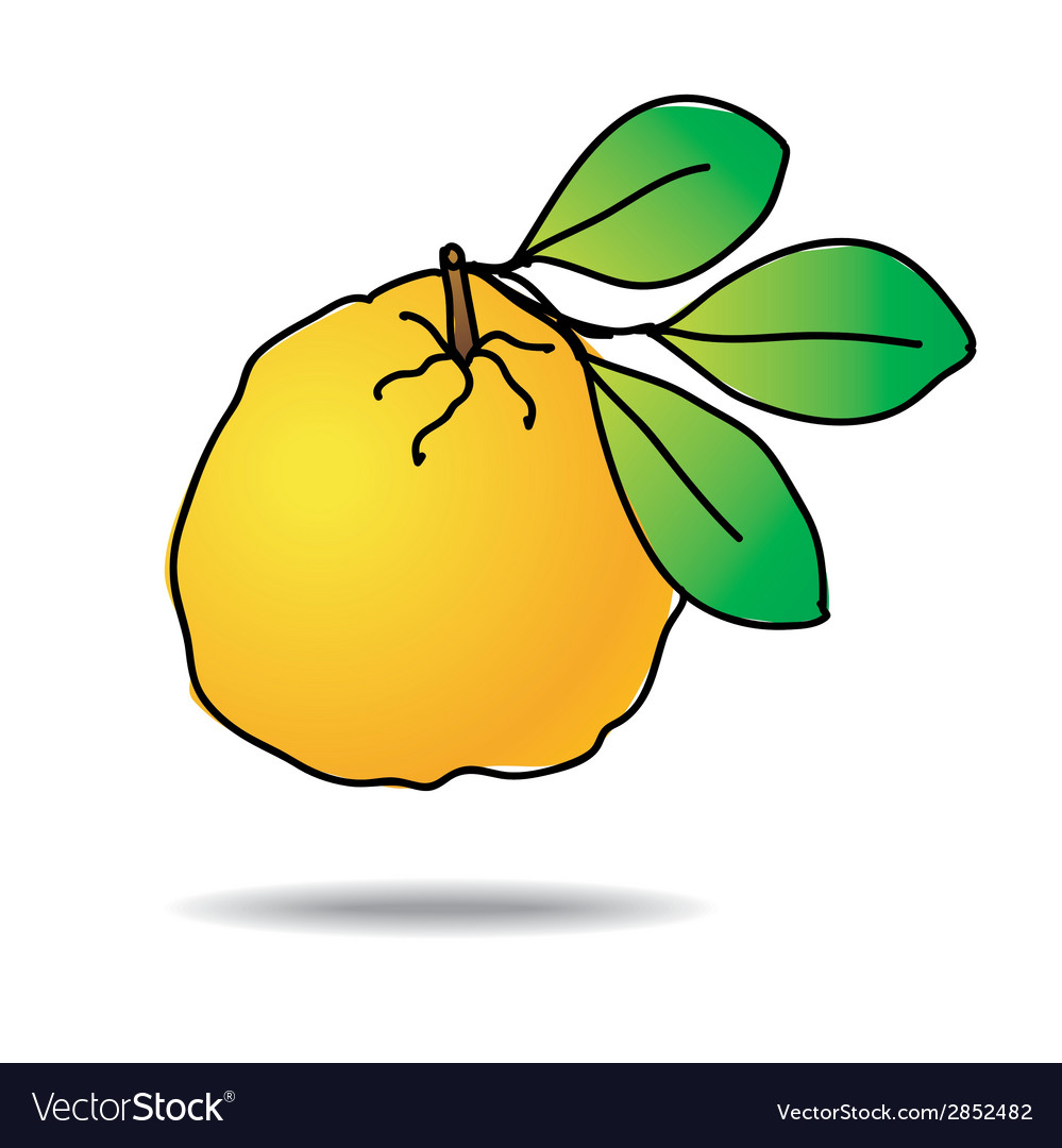 Freehand drawing ugli fruit icon vector | Price: 1 Credit (USD $1)