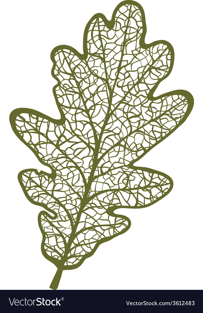Oak leaf isolated on white background vector | Price: 1 Credit (USD $1)