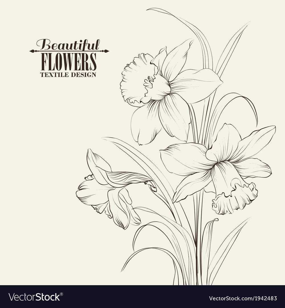 Tied narcissus flowers isolated on white vector | Price: 1 Credit (USD $1)