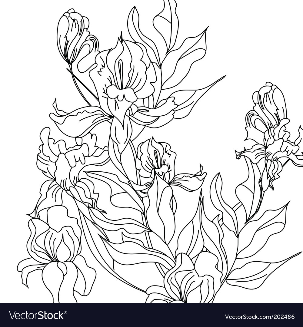 Sketch with iris flowers vector | Price: 1 Credit (USD $1)