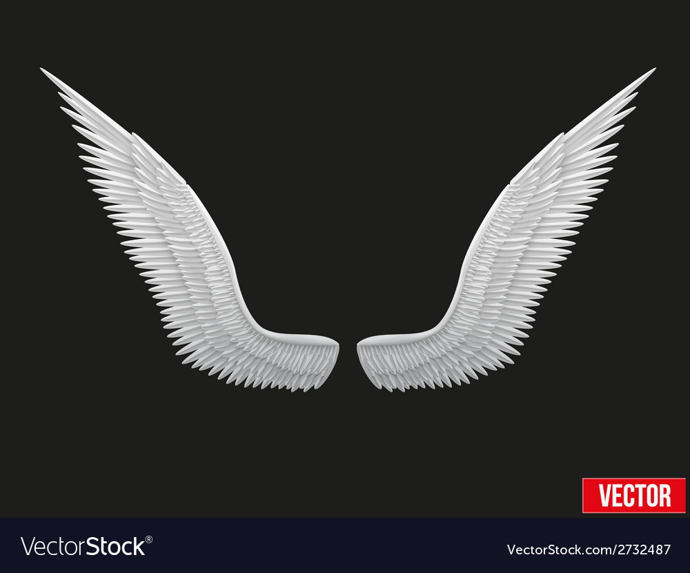 White open angel wings vector | Price: 1 Credit (USD $1)