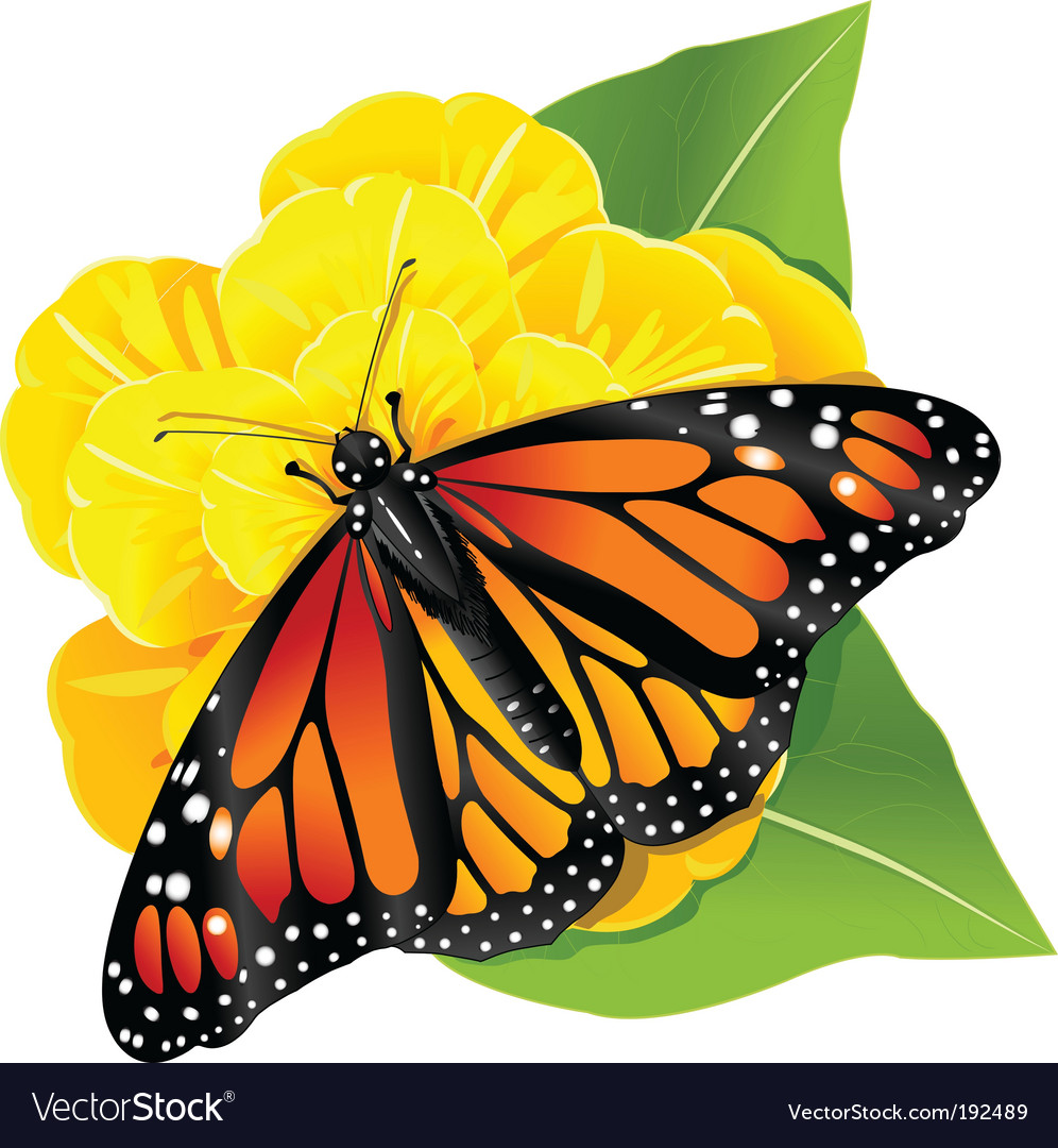Monarch butterfly on the flower vector | Price: 3 Credit (USD $3)
