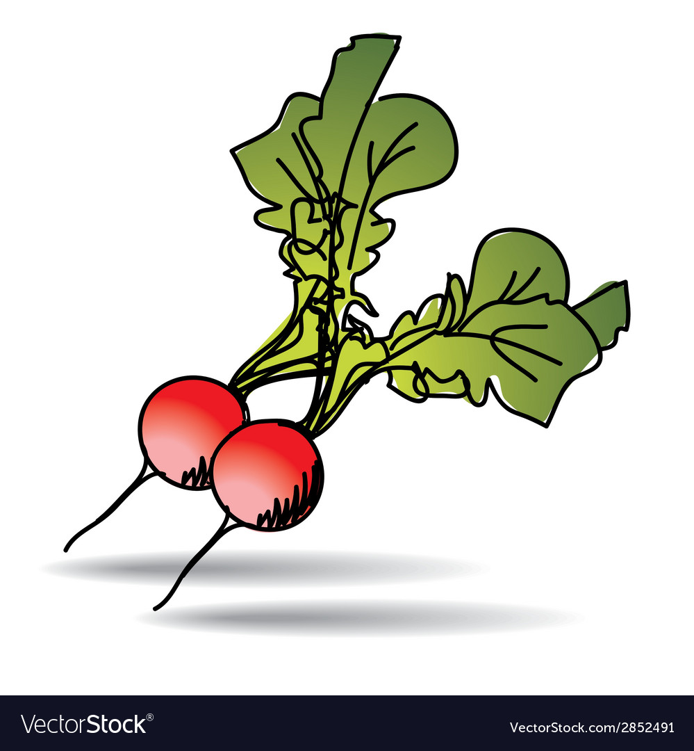 Freehand drawing radish icon vector | Price: 1 Credit (USD $1)