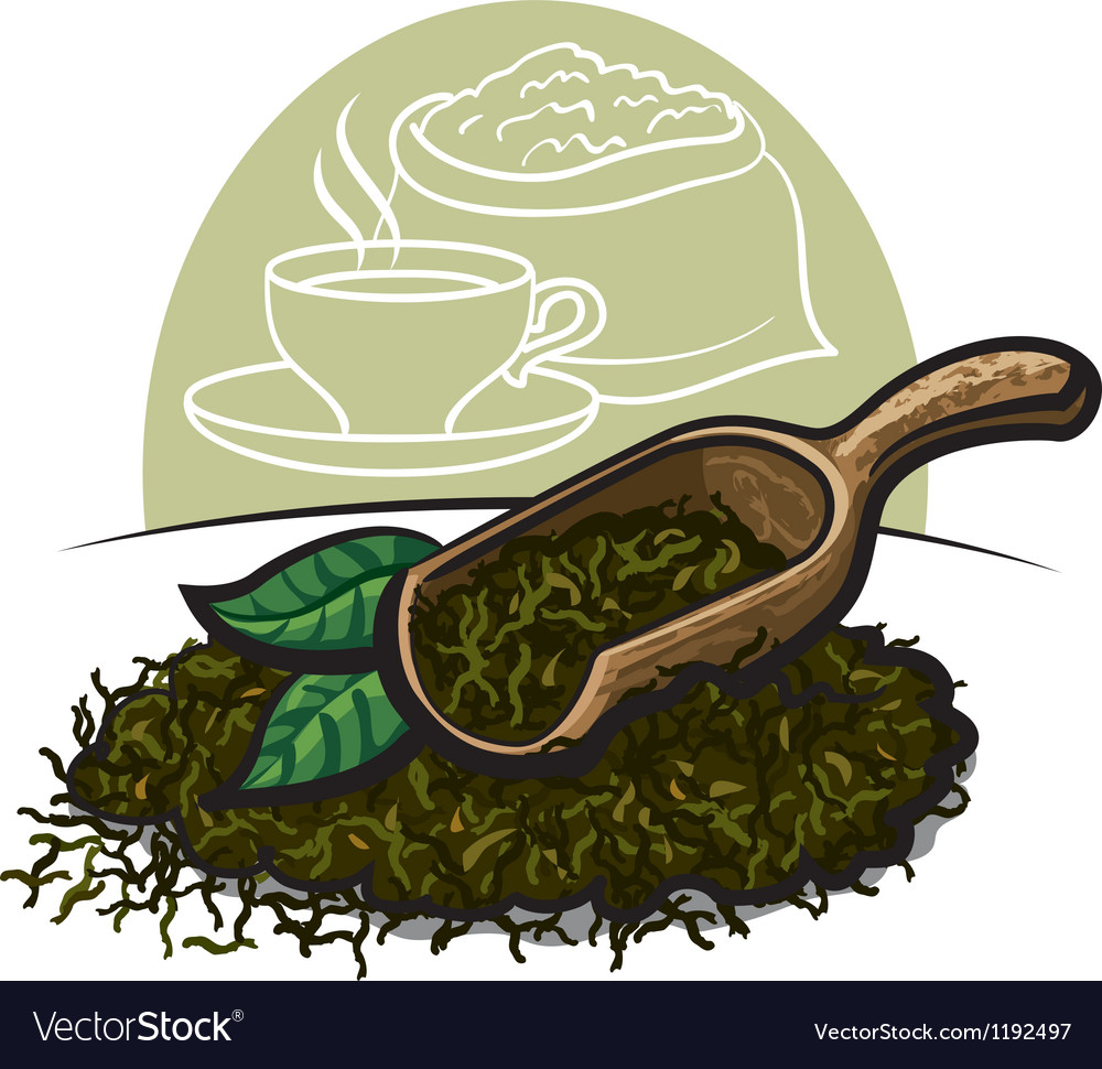 Dry green tea leaves vector | Price: 3 Credit (USD $3)